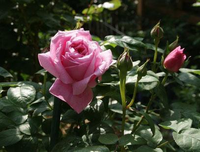 Mary Rose 1983 UK