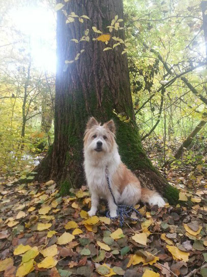 Therapiehund Assistenzhund Reitbegleithund Diabetikerhund Schulhund