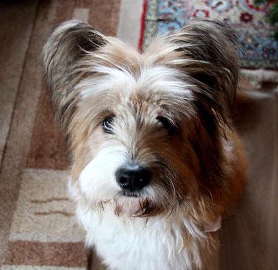 Hund freundlich Anfängerhund