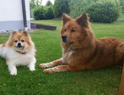 Elo Klein Groß Glatt Rau Familienhund
