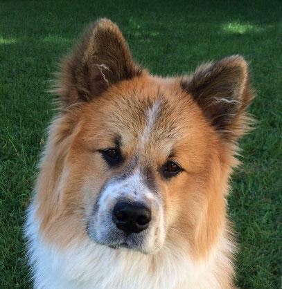 Familienhund Assistenz Therapie Schulhund Zweithund Dritthund