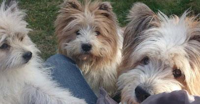 Elo Hund Klein und Groß Rau wuschelig für Kinder und Senioren