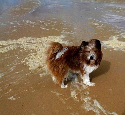 Elo Rau mittelgroß Familienhund Rasse leicht erziehbar
