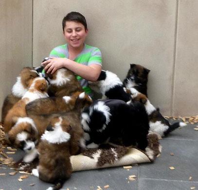 Welpe Hunderasse für Kinder und Senioren