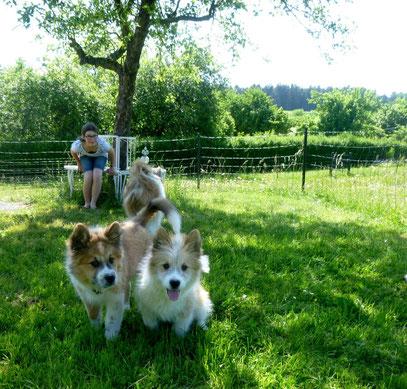Elo Familienhund Züchter Franken Bayern Ansbach