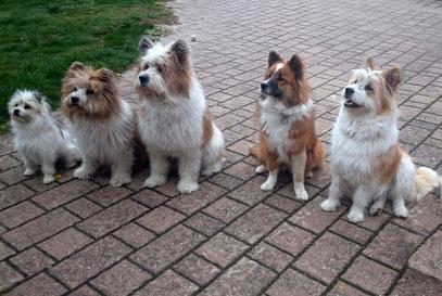 gut verträgliche Hunderasse Elo groß klein glatt rau Mehrhundehaltung