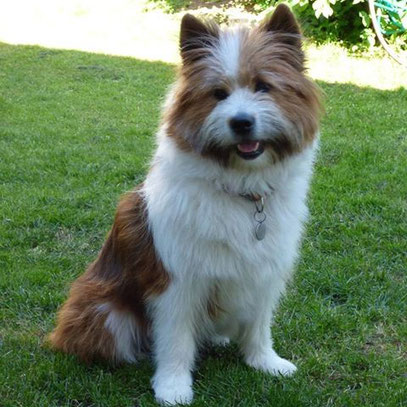 Elo Familienhund kinderfreundlich leicht erziehbar