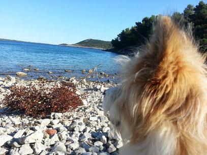 Urlaub mit Hund Elo Rau Franken
