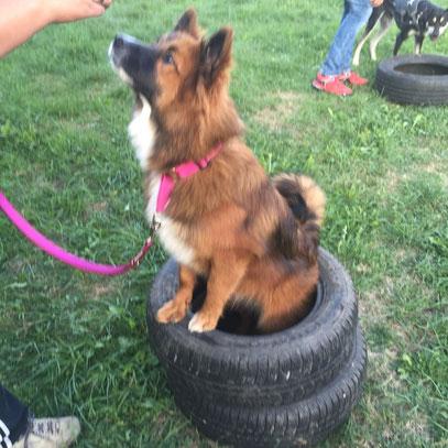 Hundeschule Anfängerhund Elo glatt Erziehung