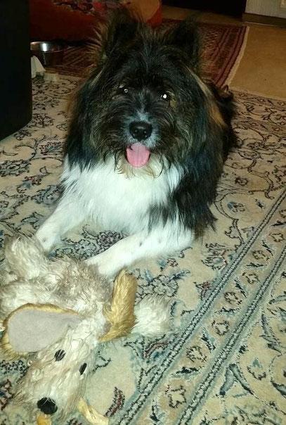 Hund Welpe kaufen