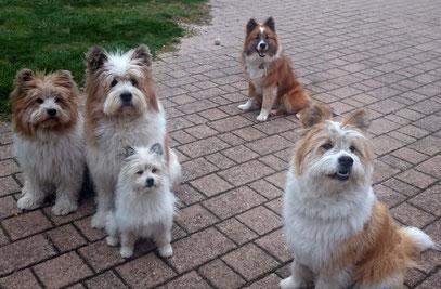 kleine Hunderasse mittlere Hunderasse 35 cm 50 cm