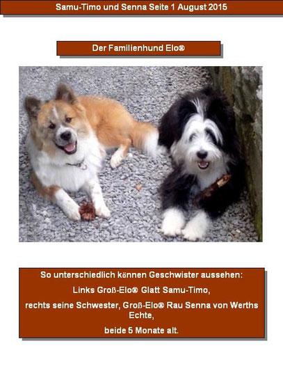 Elo Familienhund Begleithung Hunderasse Kindergeeignet Hundeschule Franken Welpenschule mittelgroß
