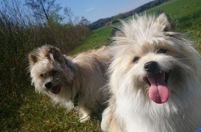 kleinbleibende Hunde