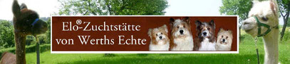Elo Alpaka Familienhund Hund Therapie Kind Tiertherapie