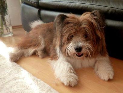Mittelgroßer Hund Welpe