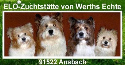 Welpe Familienhund mittelgroß