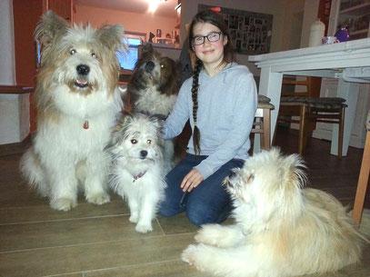 Elo wuscheliger Hund für Kinder