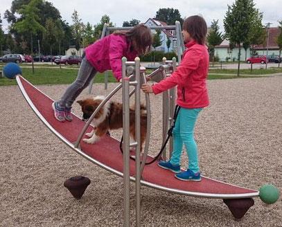 Hund Hunderasse Kind Kinder kinderlieb kindergeeignet
