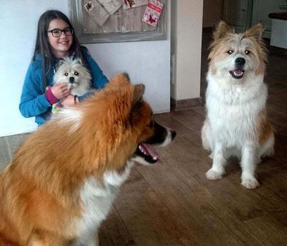 Familienhund Elo klein groß glatt rau wuschelig kinderfreundlich