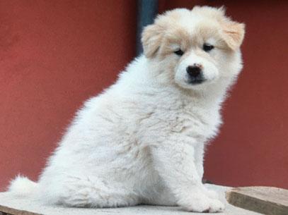 Depression Hund