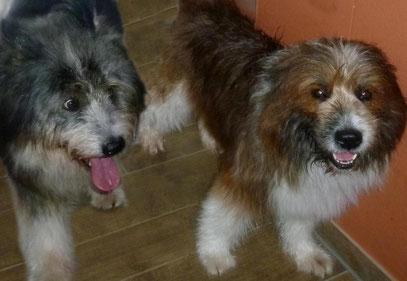 lieber Famillienhund Begleithund