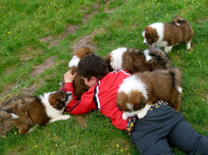 Familienhund Welpe mittelgroß Kind