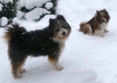 freundlicher Familienhund