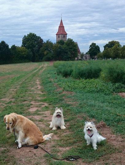 Hund klein Rasse langhaar wuschelig rau Elo in klein