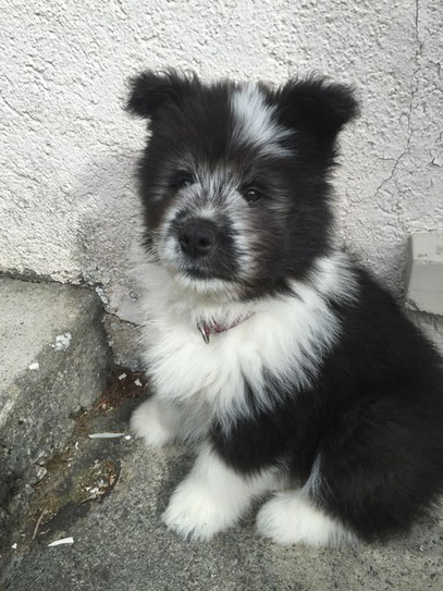 Familienhund Elo Rau Therapiehund