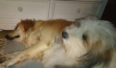Freundliche Familienhunde