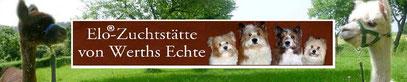 Servicehund, Assistenzhund, Diabetikerwarnhund, Schulhund, Therapiehund