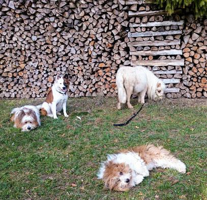 Die Elo®s Pookie, Quamie, Samba und Mini-Pony Laziza