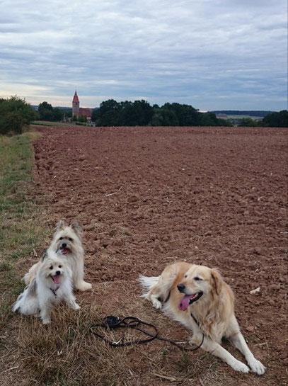 Kleine Familienhunde wuschelig glatt Hunde Hunderasse