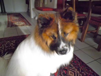 Elo Glatt Rau Langhaar Familienhund Senioren Kinder Welpenschule Hundeschule