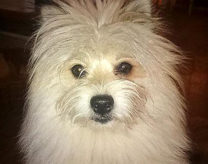 Kleinbleibender Familienhund aktive Familie