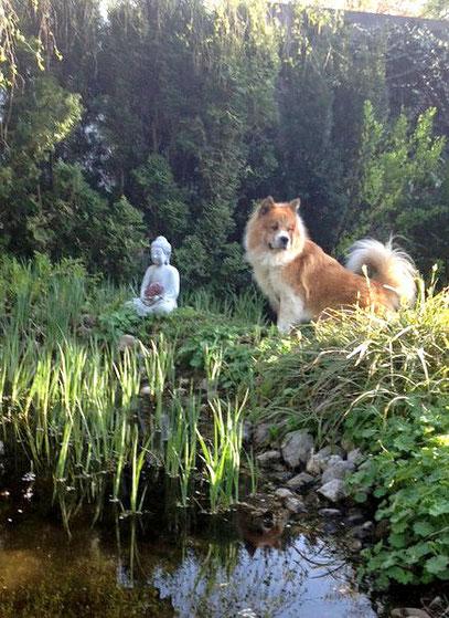 Friedliche Hunderasse