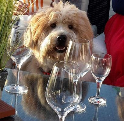 Restaurant mit Hund