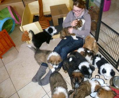 Familienhunde-Erziehung