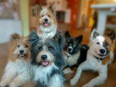 Familienhund Elo®️ in den Felltypen Rauhaar und Glatthaar