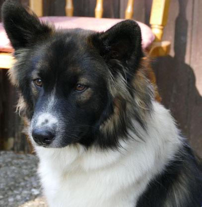 Anfängerhund Zweithund Dritthund Servicehund Elo Familie Kind
