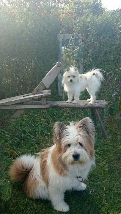 Elo Klein Groß Rau mittlerer Familienhund