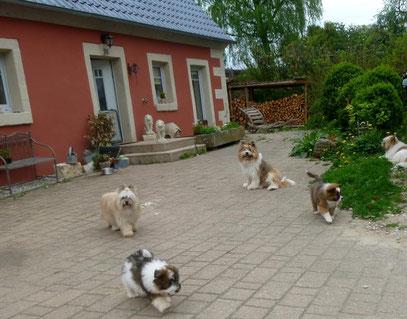 Familienhund klein mittelgroß Elo