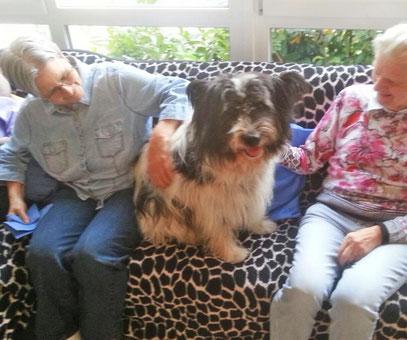 Hund für Arbeit mit Demenzkranken