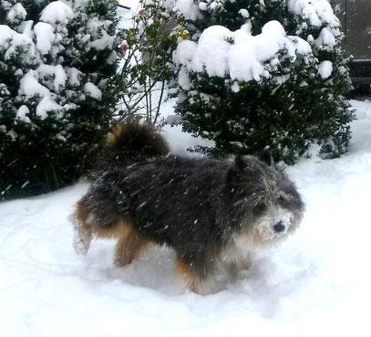 Familienhund kaufen Elo