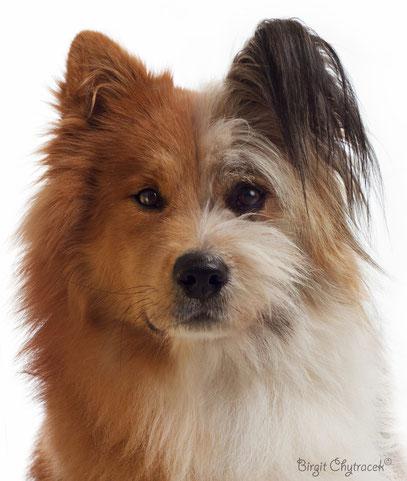 Elo Familienhund Hunderasse
