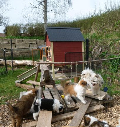 Welpen spielen Spielstunde Hundeschule Prägung Sozialisierung