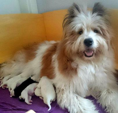 Familienhund Elo mit Welpen