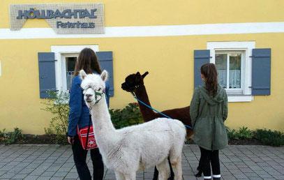 Therapie tiergestützt Alpaka Lama Ansbach