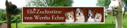 Familienhund Elo Welpe Zucht Franken Welpenschule