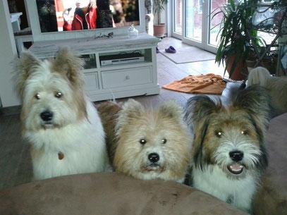 Familienhund groß mittelgroß klein